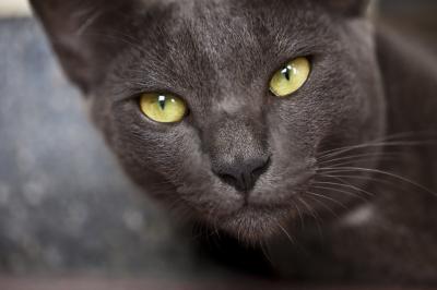 NO piensen en un gato negro